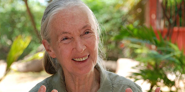 Jane's Journey – Die Lebensreise der Jane Goodall
